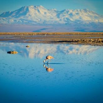 Atacama Salt-Flat
